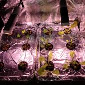 Hydroponics Lettuce and Herbs